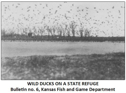 7-Bulletin no. 6, Wild Ducks on a State Refuge